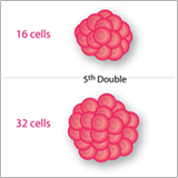 Cancer Doubling Graphic